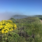 The California & Southwest Super Bloom